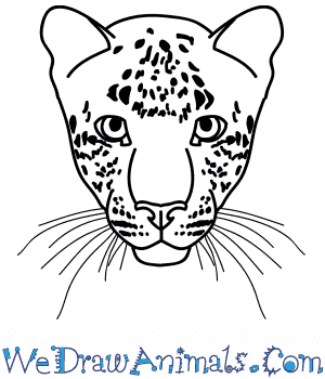 How to Draw a Leopard Face in 7 Easy Steps