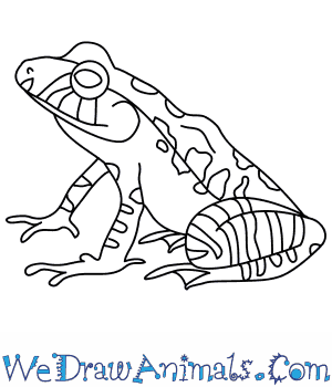 How to Draw a Leopard Robber Frog in 8 Easy Steps