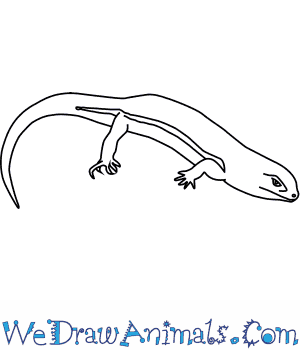 How to Draw a Leopard Skink in 5 Easy Steps