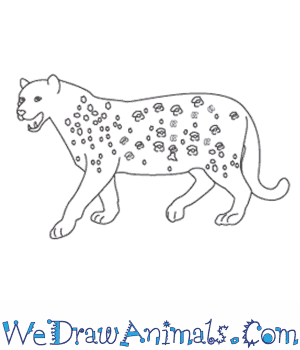 How to Draw a Leopard in 12 Easy Steps