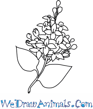 How to Draw a Lilac Flower in 4 Easy Steps