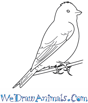 How to Draw a Linnet in 9 Easy Steps