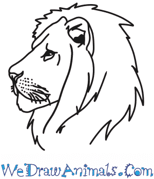 How To Draw A Lion Head In this page you can find 39+ lion outline vector images for free download. how to draw a lion head
