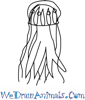 How to Draw a Lions Mane Jellyfish in 4 Easy Steps