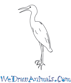 How to Draw a Little Blue Heron in 6 Easy Steps