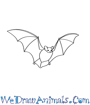 How to Draw a Little Brown Bat in 6 Easy Steps