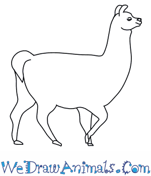 How to Draw a Llama in 8 Easy Steps