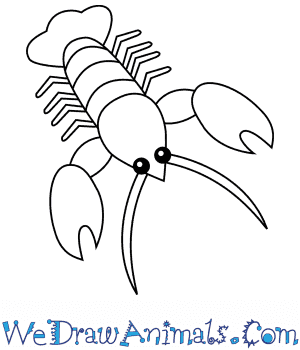 How to Draw a Lobster For Kids in 6 Easy Steps