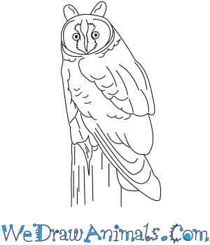 How to Draw a Long Eared Owl in 7 Easy Steps