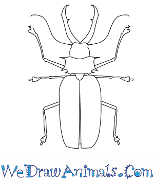 How to Draw a Long Horned Beetle in 7 Easy Steps