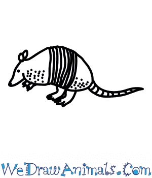 How to Draw a Long Nosed Armadillo in 6 Easy Steps