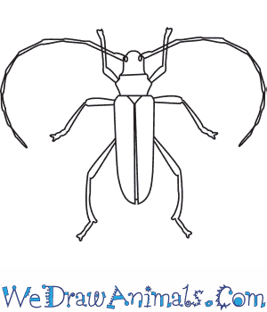 How to Draw a Longhorn Beetle in 6 Easy Steps