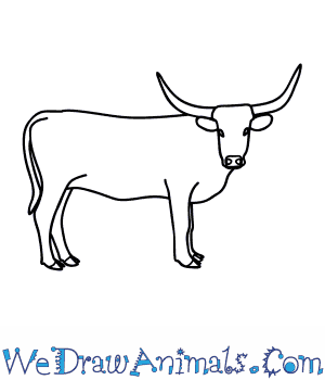 How to Draw a Longhorn Cattle in 9 Easy Steps