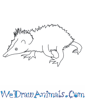 How to Draw a Lowland Streaked Tenrec in 5 Easy Steps
