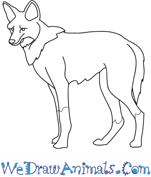 How to Draw a Maned Wolf in 8 Easy Steps