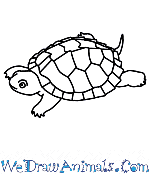 How to Draw a Map Turtle in 6 Easy Steps