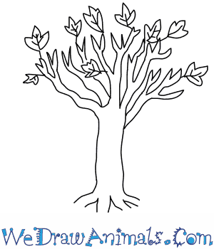 How to Draw a Maple Tree in 4 Easy Steps