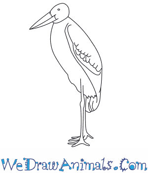 How to Draw a Marabou Stork in 8 Easy Steps