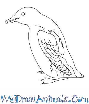 How to Draw a Marbled Murrelet in 6 Easy Steps