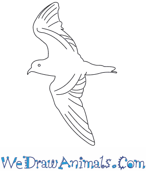 How to Draw a Markhams Storm Petrel in 6 Easy Steps
