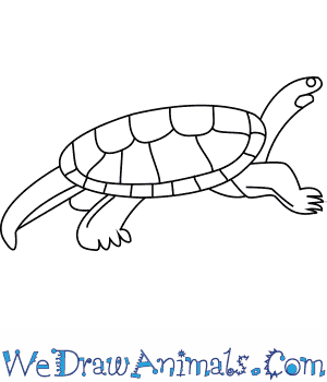 How to Draw a Mary River Turtle in 7 Easy Steps