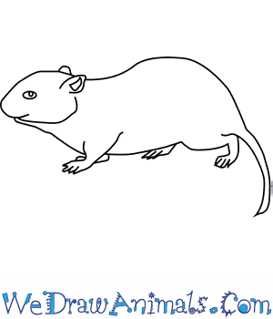 How to Draw a Meadow Vole in 5 Easy Steps