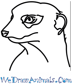 How to Draw a Meerkat Head in 9 Easy Steps