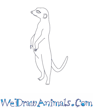 How to Draw a Meerkat in 9 Easy Steps