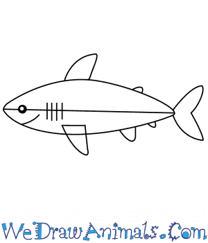 How to Draw a Megalodon Shark For Kids in 6 Easy Steps
