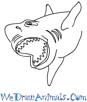 How to Draw a Megalodon Shark Head in 11 Easy Steps