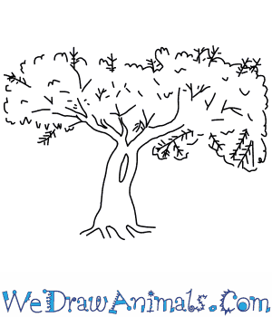 How to Draw a Mesquite Tree in 5 Easy Steps