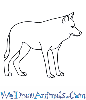 how to draw a mexican wolf