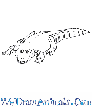 How to Draw a Mississippi Alligator in 6 Easy Steps