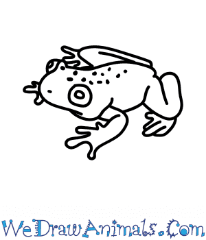 How to Draw a Mist Frog in 6 Easy Steps