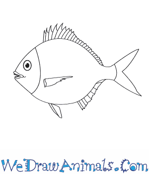 How to Draw a Mojarra in 5 Easy Steps