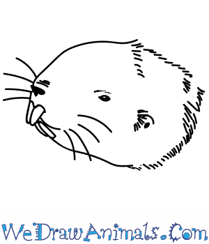 How to Draw a Mole Head in 10 Easy Steps