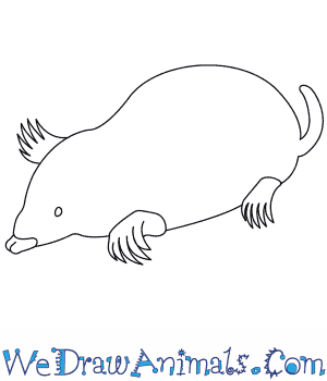 How to Draw a Mole in 6 Easy Steps
