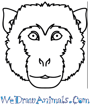 How to Draw a Monkey Face in 6 Easy Steps