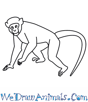 how to draw a monkey rh wedrawanimals com labelled diagram of a monkey labelled diagram of a monkey