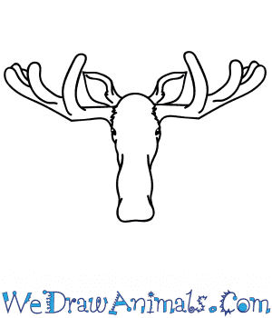 How to Draw a Moose Face in 5 Easy Steps