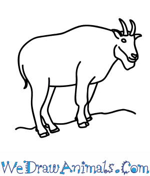 How to Draw a Mountain Goat in 10 Easy Steps