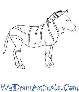 How to Draw a Mountain Zebra in 7 Easy Steps