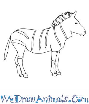 How To Draw A Mountain Zebra