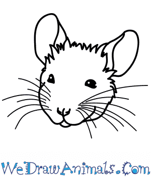 How to Draw a Mouse Face in 6 Easy Steps