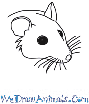How to Draw a Mouse Head in 5 Easy Steps