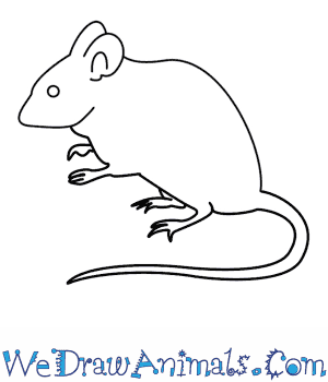 How to Draw a Mouse in 7 Easy Steps