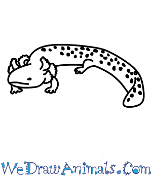 How to Draw a Mudpuppy in 6 Easy Steps