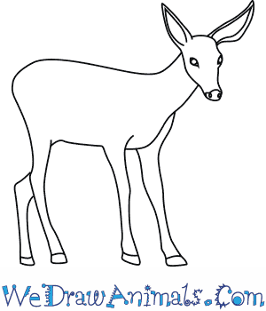 How to Draw a Mule Deer in 7 Easy Steps