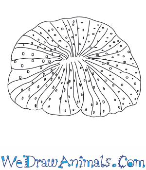How to Draw a Mushroom Coral in 3 Easy Steps
