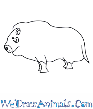 How to Draw a Musk Ox in 8 Easy Steps